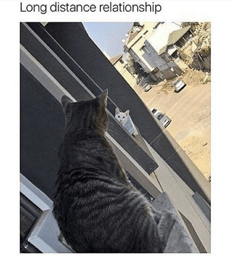 meme about long distance relationships with pic of two cats looking at each other from adjacent windows