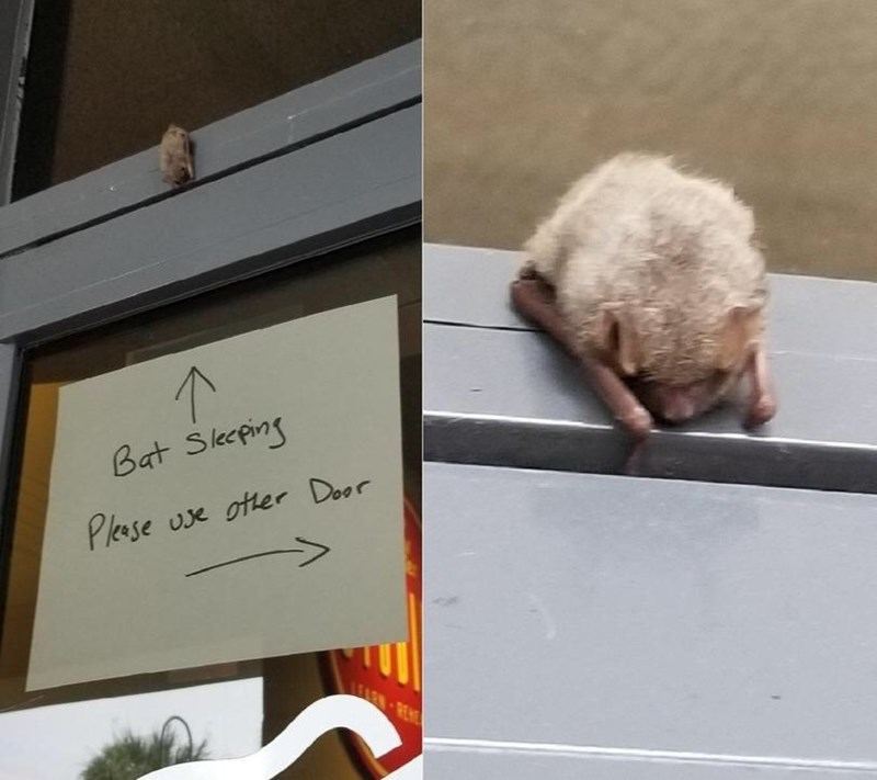 Pic of a little bat sleeping on top of a door with a sign underneath that says to please use other door