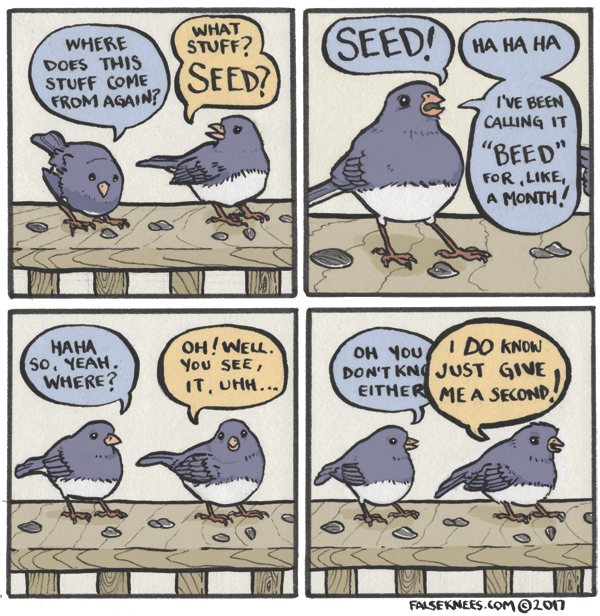 "webcomic bird - Cartoon - WHAT SEED! WHERE DOES THIS STUFF COME FROM AGAIN? STUFF? HA HA HA (SEED? I'VE BEEN CALLING IT |""BEED"" FOR LIKE, A MONTH OH!WELL. Yου SEE, IT, UHH... I DO KNOW HAHA So YEAH WHERE? OH YoU DON'T KN JUST GINE EITHER MEA SECOND FALSEKNEES.COM O2017"