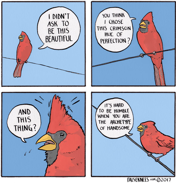 webcomic bird - Bird - I DIDN'T ASK TO BE THIS BEAUTIFUL YOU THINK I CHOSE THIS CRIMSON HUE OF PERFECTION? IT'S HARD TO BE HUMBLE WHEN YOU ARE THE ARCHETYPE OF HANDSOME AND THIS THING? FALSEKNEESOM2017