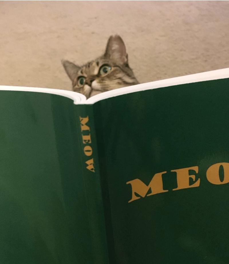 Cat - MEO MEOW