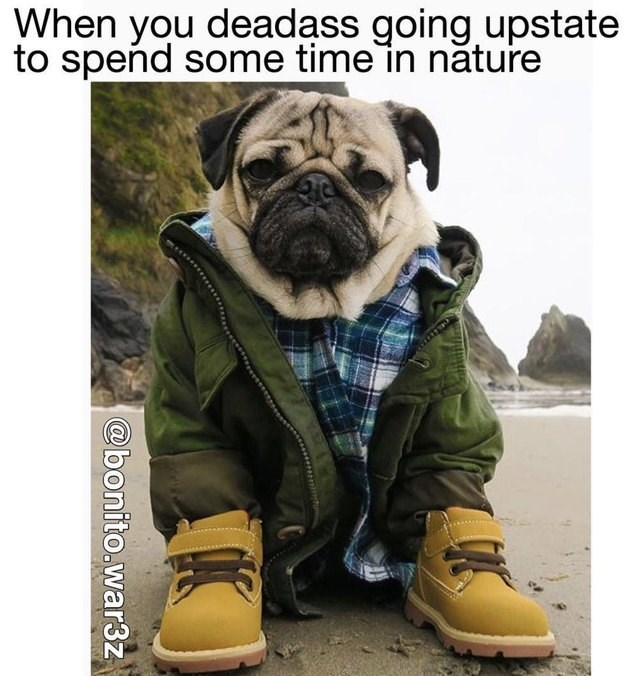 Pug - When you deadass going upstate to spend some time in năture @bonito.war3z