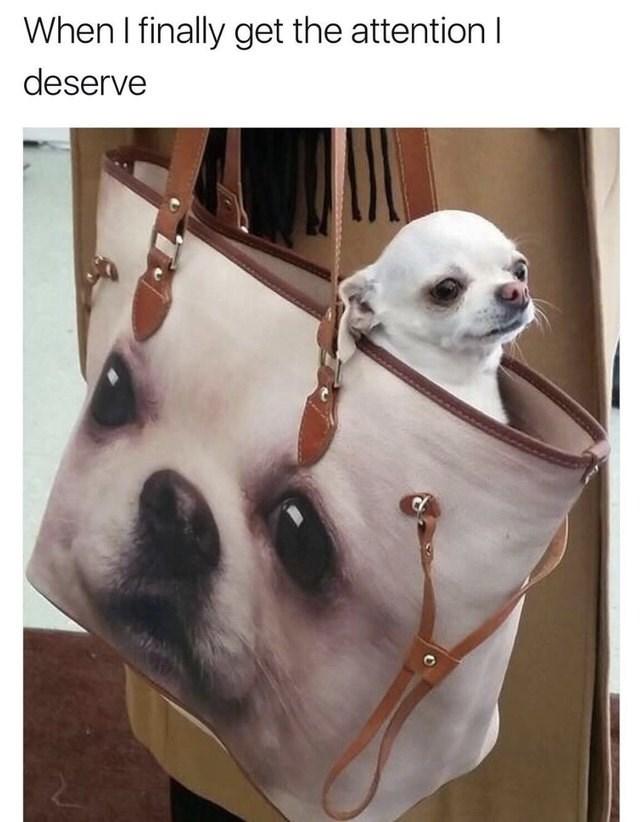 Dog - When I finally get the attention I deserve