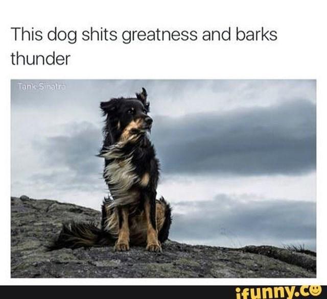 Canidae - This dog shits greatness and barks thunder Tank Shatra ifunny.co