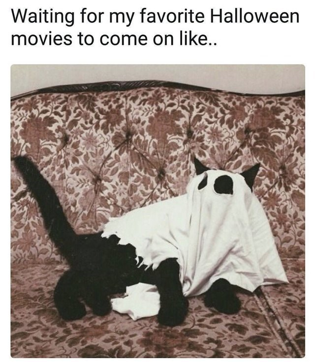 Adaptation - Waiting for my favorite Halloween movies to come on like..