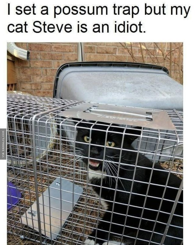 Cage - I set a possum trap but my cat Steve is an idiot. SERI HOOTOTNHaA