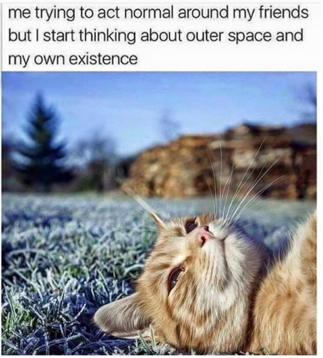 Cat - me trying to act normal around my friends but I start thinking about outer space and my own existence