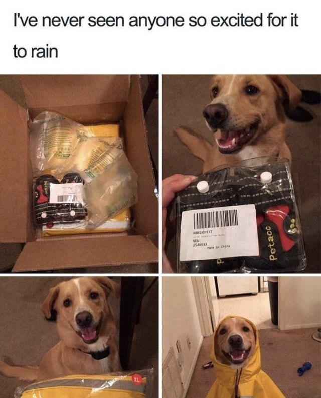 Dog - I've never seen anyone so excited for it to rain 01ADT NEW 254653 a e Ci Petacc