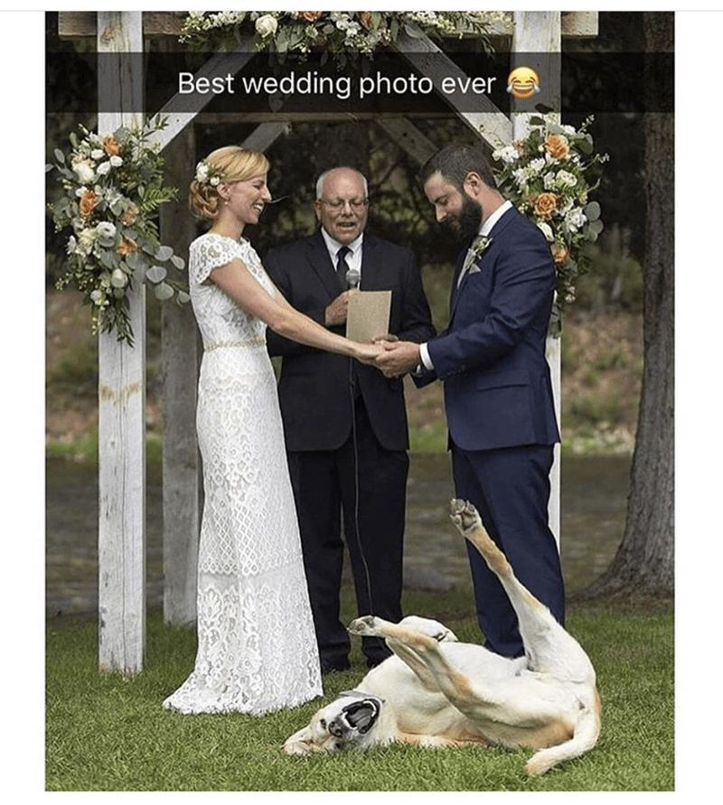 Wedding dress - Best wedding photo ever