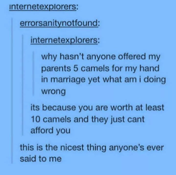 Text - internetexplorers: errorsanitynotfound: internetexplorers: why hasn't anyone offered my parents 5 camels for my hand in marriage yet what am i doing wrong its because you are worth at least 10 camels and they just cant afford you this is the nicest thing anyone's ever said to me