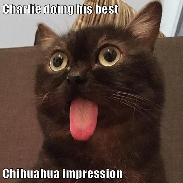 Cheezburger Image 9200765952