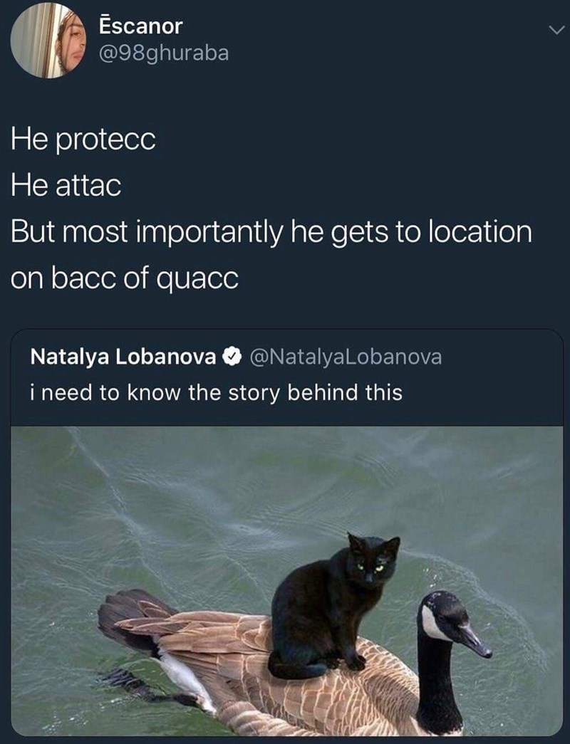 Funny meme about cat riding on top of a goose.