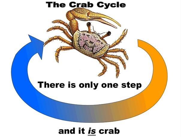 Surreal meme - Rock crab - The Crab Cycle There is only one step and it is crab
