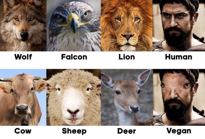 keto meme - Mammal - Wolf Falcon Lion Human Vegan Cow Sheep Deer