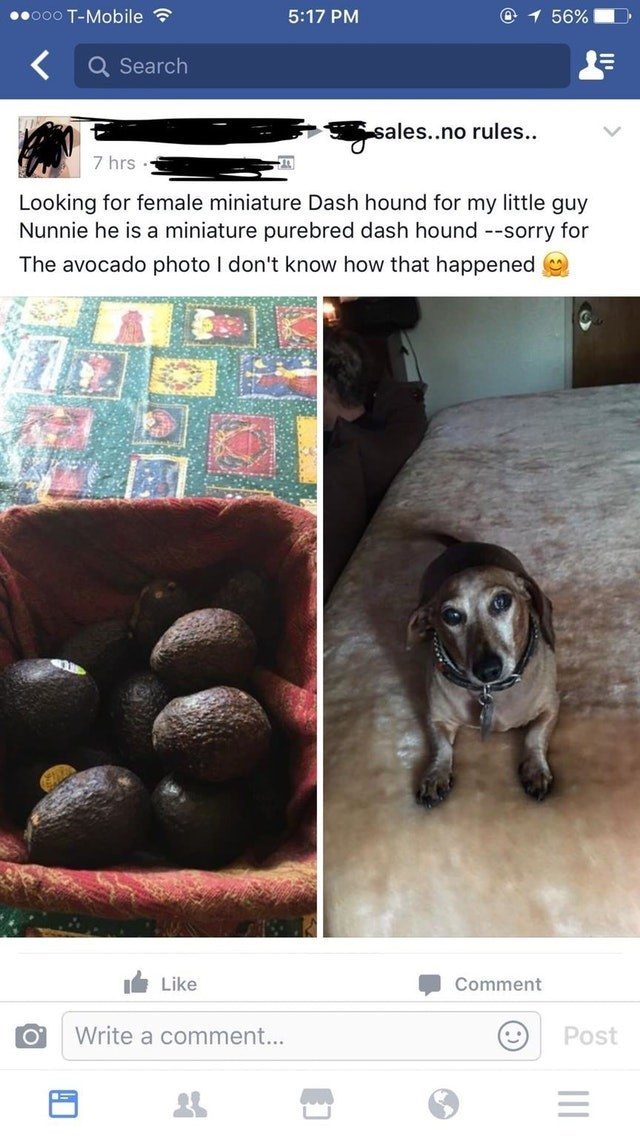 Canidae - ooO T-Mobile 56% 5:17 PM Q Search sales..no rules.. 7 hrs Looking for female miniature Dash hound for my little guy Nunnie he is a miniature purebred dash hound --sorry for The avocado photo I don't know how that happened Like Comment Write a comment... Post