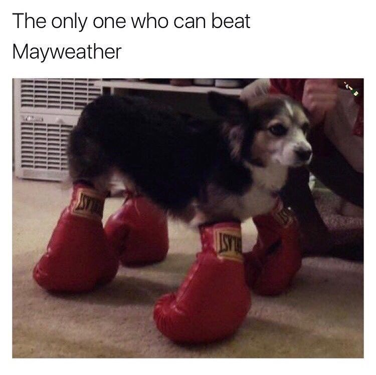 Dog - The only one who can beat Mayweather