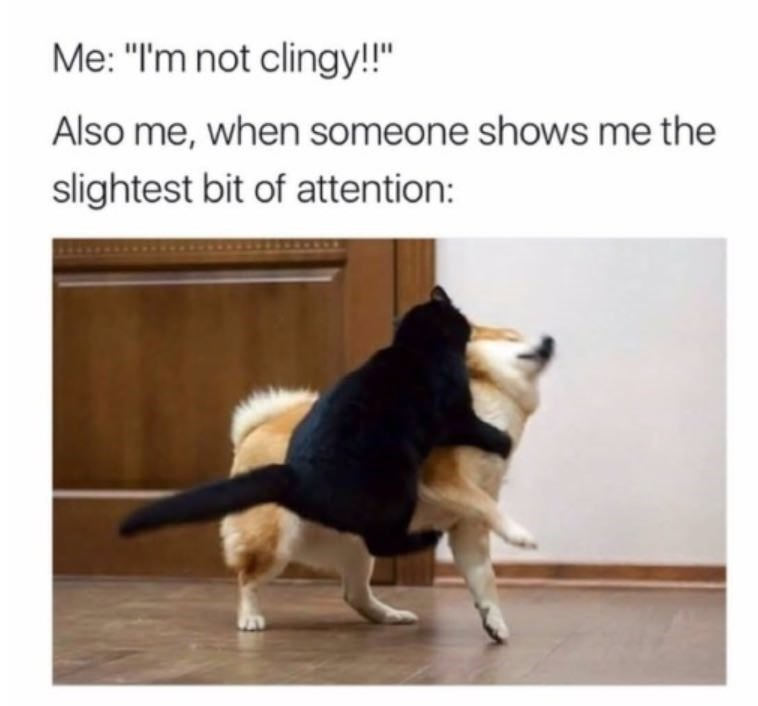 "Pic of a cat latching onto a shiba inu under the caption, ""Me: I'm not clingy! Also me, when someone shows me the slightest bit of affection..."""