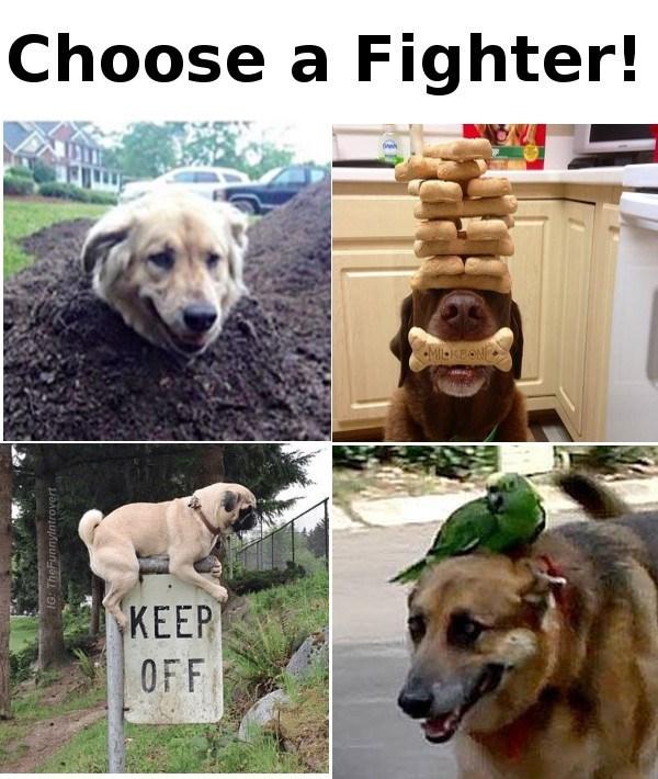 Dog - Choose a Fighter! MKBON KEEP OFF IG: TheFunnylntrovert