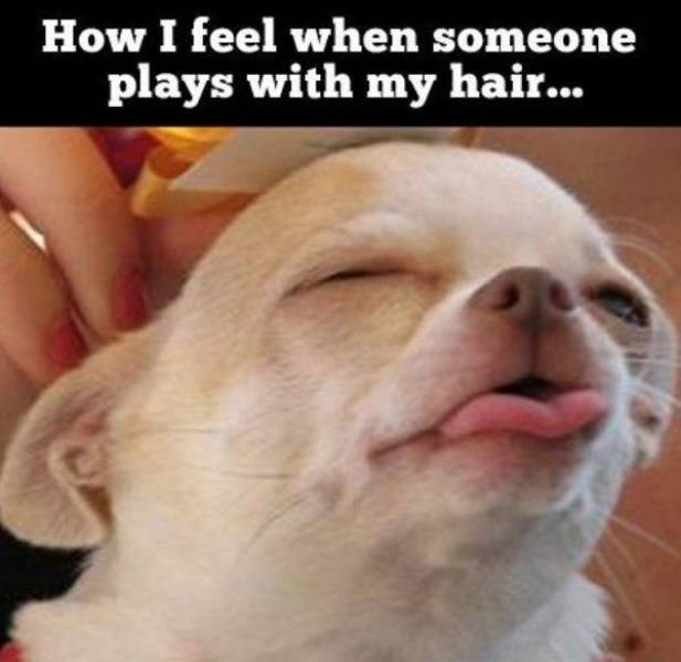 Dog - How I feel when someone plays with my hair...