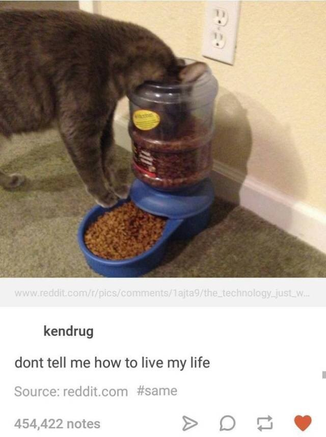 "Picture of a cat eating directly out of the automatic feeder with the caption, ""Don't tell me how to live my life"""