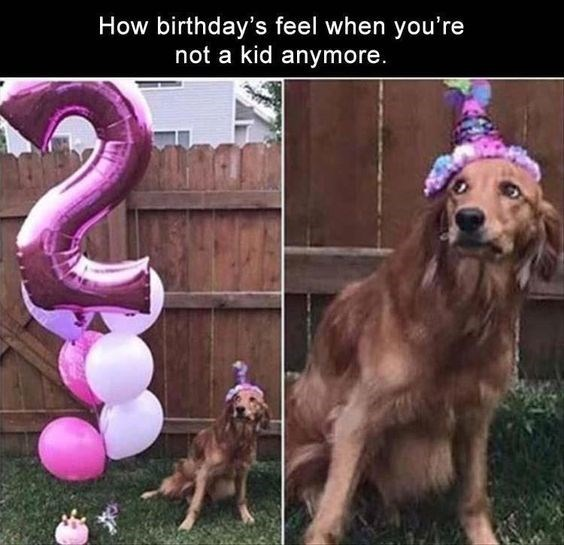 a cute dog wearing a pink birthday hat looking scared next to a huge inflatable pink number 2 balloon and other balloons happy birthday meme