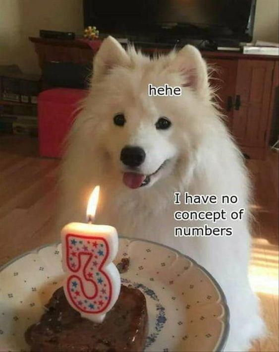 dog meme for 3rd birthday