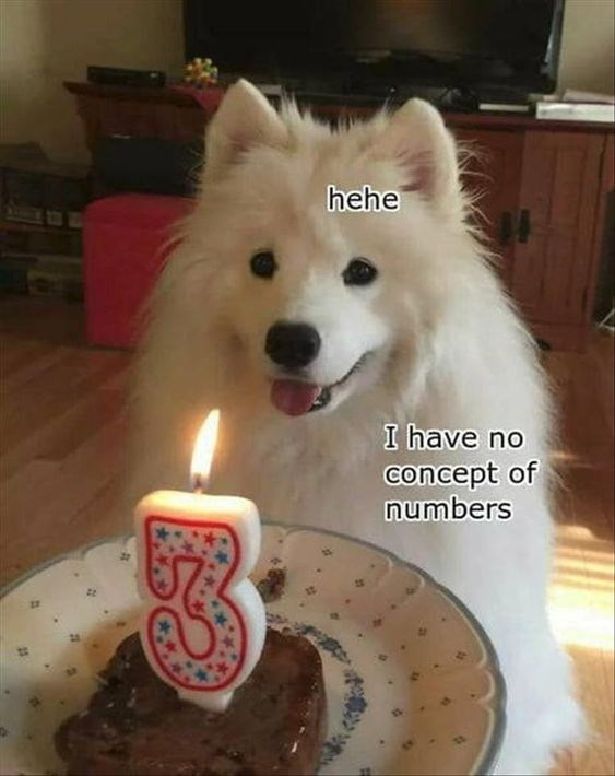 fluffy white dog smiling in front of birthday cake with 3 candle on it happy birthday meme