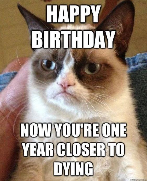 grumpy cat looking grumpy happy birthday meme