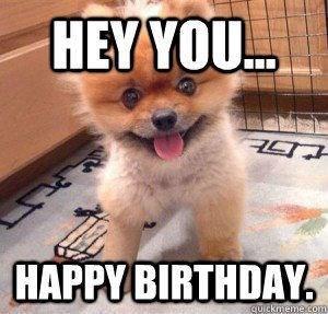 small fluffy orange dog happy birthday meme