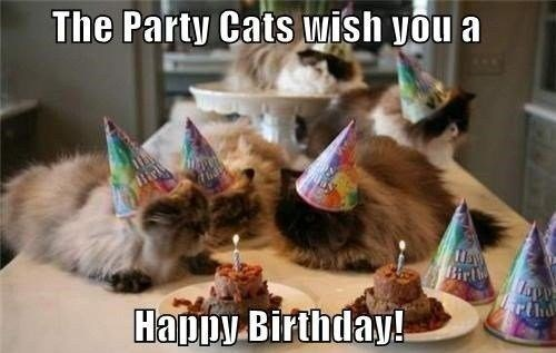 five fluffy grey cats wearing party hats sitting on table with cake and candles happy birthday meme