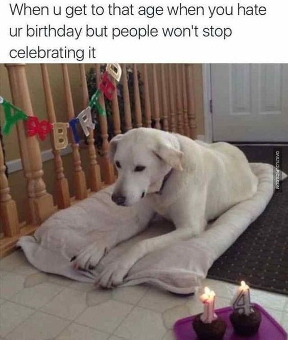 white dog on dog bed looking sadly at ground with 14 candles on cupcakes next to it happy birthday meme