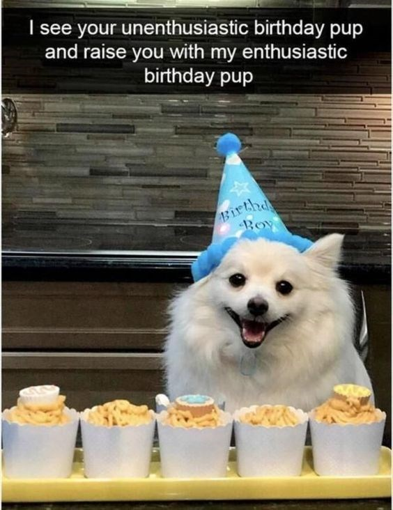fluffy white dog wearing blue party hat sitting behind white cups of party food happy birthday meme