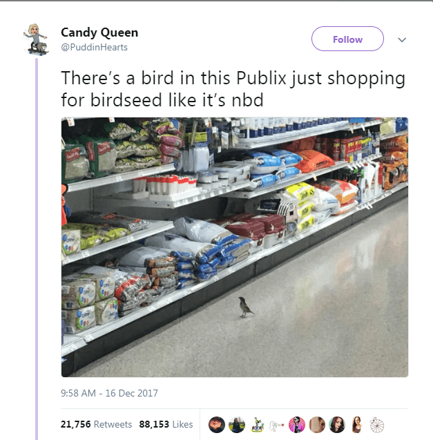 Product - Candy Queen Follow @PuddinHearts There's a bird in this Publix just shopping for birdseed like it's nbd 204284 9:58 AM 16 Dec 2017 21,756 Retweets 88,153 Likes