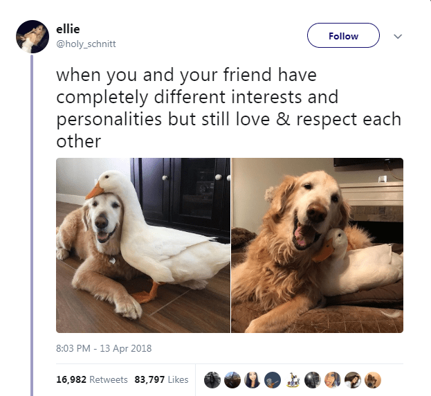 Dog - ellie Follow @holy_schnitt when you and your friend have completely different interests and personalities but still love & respect each other 8:03 PM 13 Apr 2018 16,982 Retweets 83,797 Likes