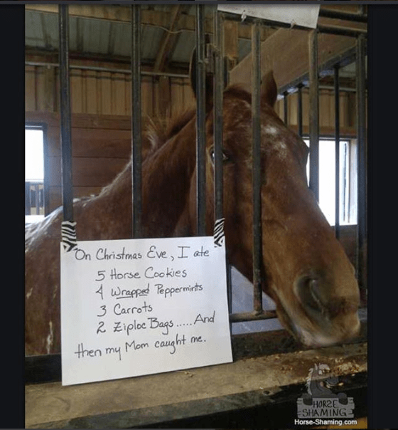 Organism - On Christmas Eve,I ate 5 Horse Cookies 4 wrapped Teppermits 3 Carrots 2 Ziploe Bags Mom caught And me. then m4 HORSE SHAMING Horse-Shaming.com