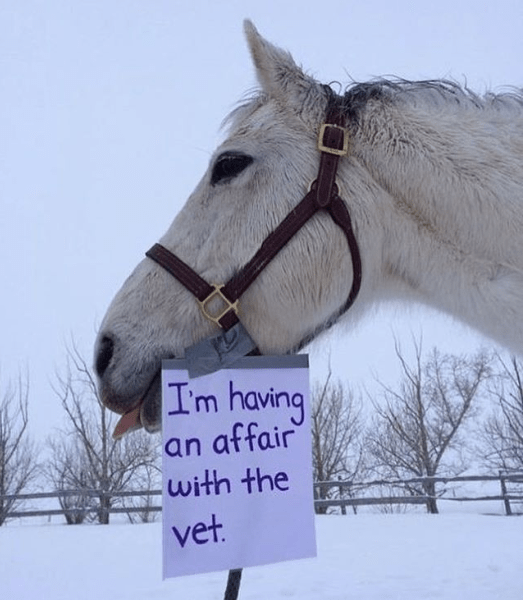 Halter - Im having an affair with the vet