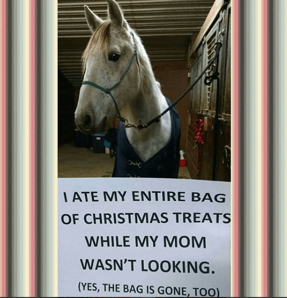 Horse - IATE MY ENTIRE BAG OF CHRISTMAS TREATS WHILE MY MOM WASN'T LOOKING. (YES, THE BAG IS GONE, TOO)