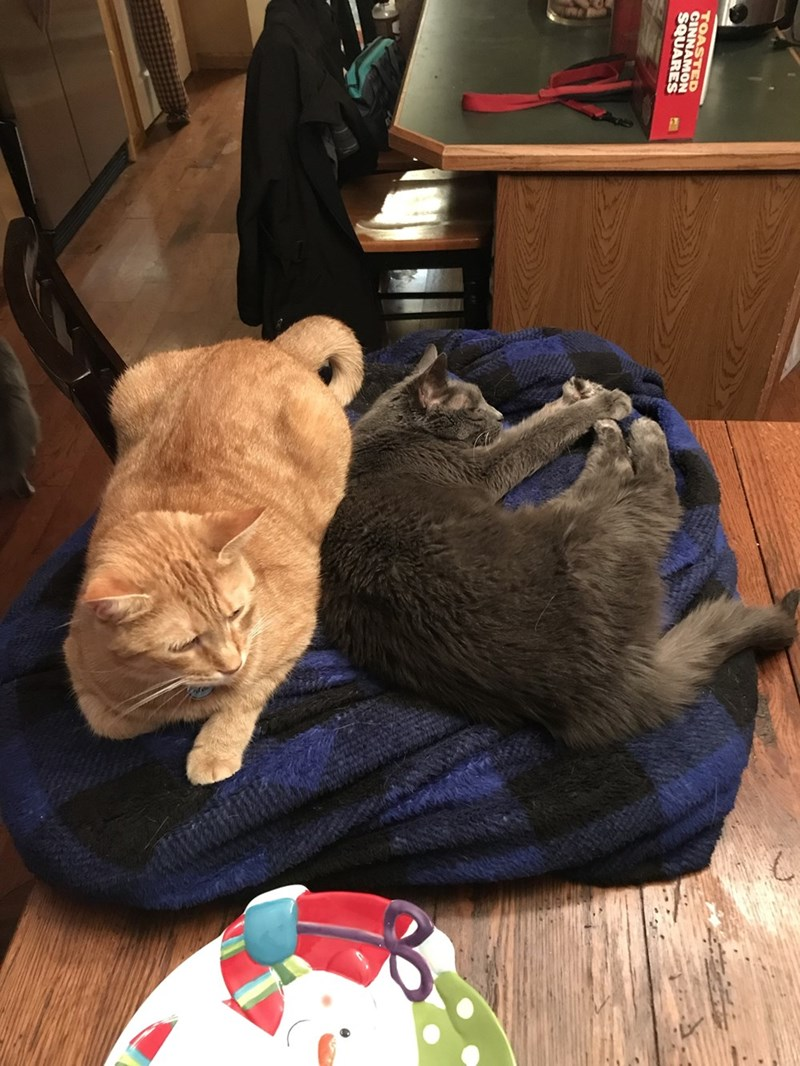 Cat - TOASTED CINNAMON SQUARES