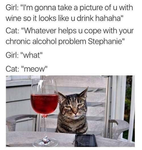 """Cat - Girl: """"I'm gonna take a picture of u with wine so it looks like u drink hahaha"""" Cat: """"Whatever helps u cope with your chronic alcohol problem Stephanie"""" Girl: """"what"""" Cat: """"meow"""" MiPopal"""