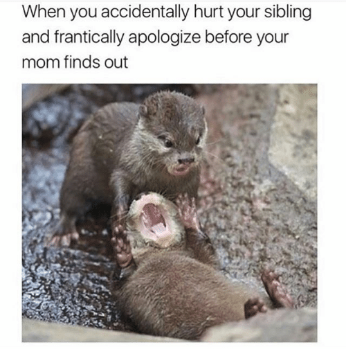Adaptation - When you accidentally hurt your sibling and frantically apologize before your mom finds out