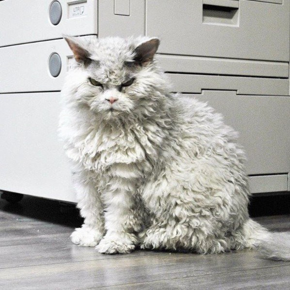 angry - Cat - LTR