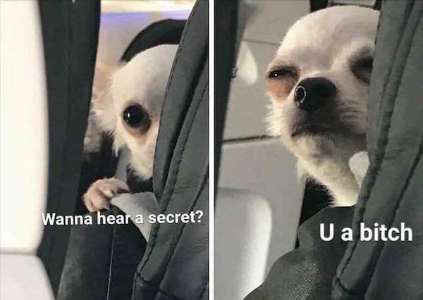 Dog - Wanna heara secret? U a bitch
