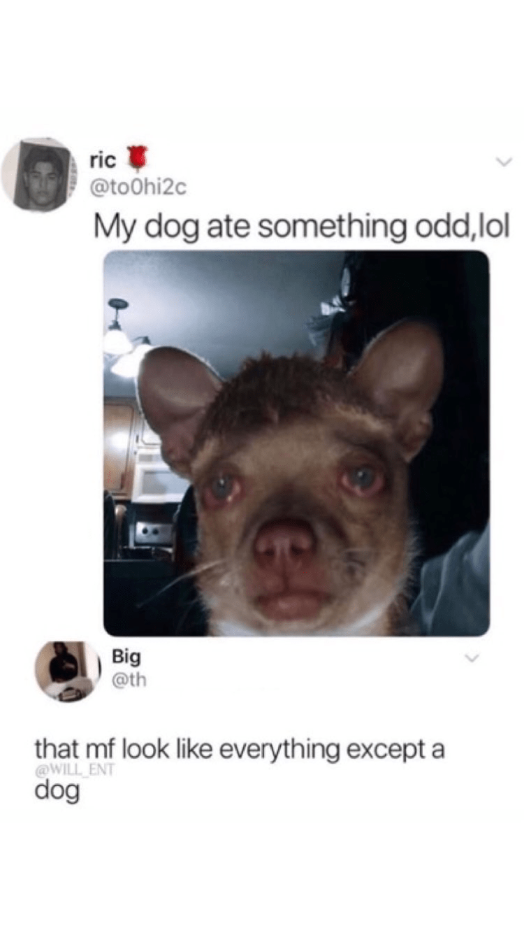 """Tweet that says, """"My dog ate something odd lol"""" above a pic of a dog with red eyes; someone comments below, """"That MF look like everything except a dog"""""""