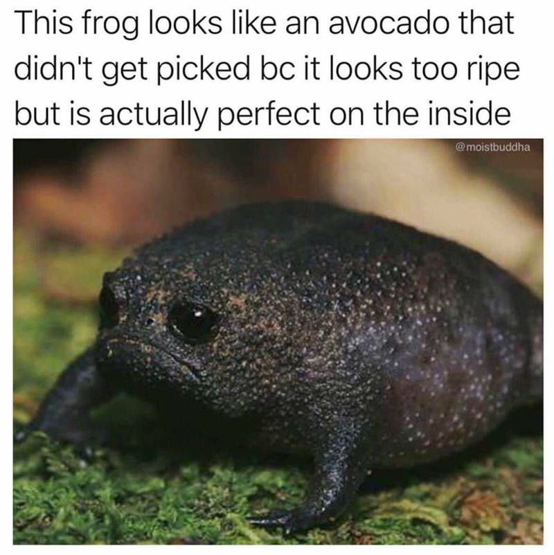 Vertebrate - This frog looks like an avocado that didn't get picked bc it looks too ripe but is actually perfect on the inside @moistbuddha