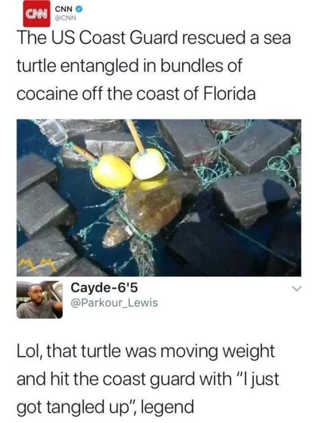 """Adaptation - CNN CNN@CNN The US Coast Guard rescued a sea turtle entangled in bundles of cocaine off the coast of Florida Cayde-6'5 @Parkour_Lewis Lol, that turtle was moving weight and hit the coast guard with """"I just got tangled up"""", legend"""
