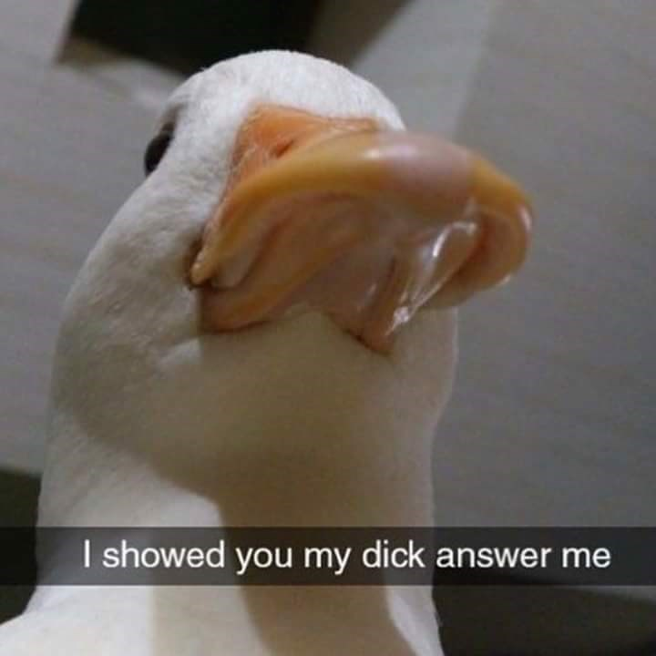 bird meme - Dish - I showed you my dick answer me