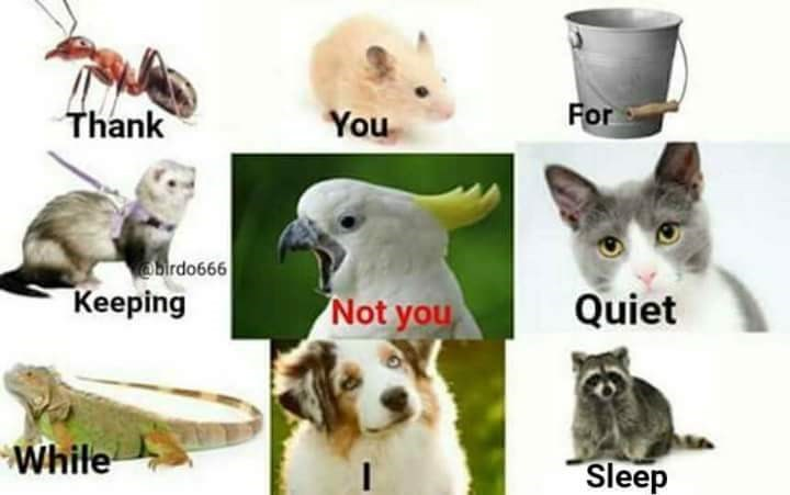 bird meme - Vertebrate - For Thank You brdo666 Keeping Quiet Not you While Sleep