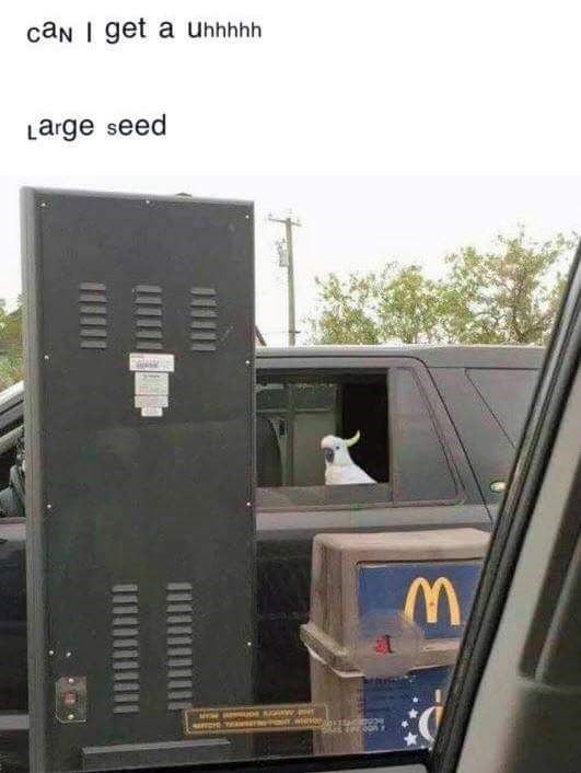 bird meme - Transport - caN I get a uhhhhh arge seed