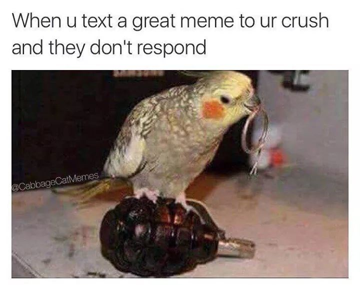 bird meme - Bird - When u text a great meme to ur crush and they don't respond @CabbageCatMemes