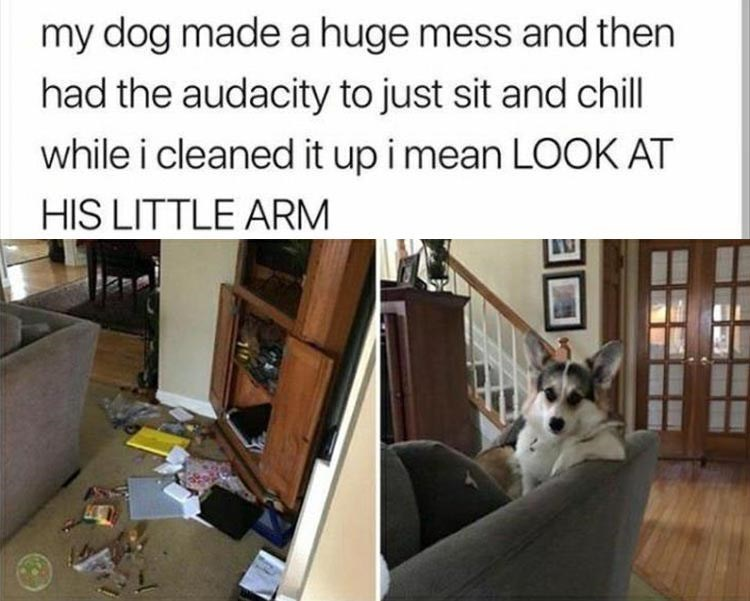 Canidae - my dog made a huge mess and then had the audacity to just sit and chill while i cleaned it up i mean LOOK AT HIS LITTLE ARM